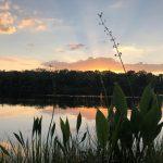 Canterbury Lake